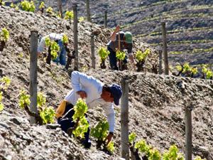 Nordportugal - Weinbauern bei der Arbeit im Dourotal