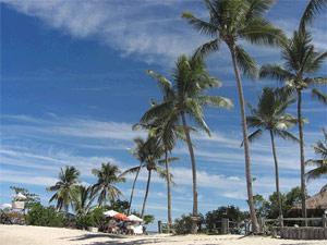 brazilie tinhare strand reizen