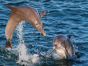brazilie fernando dolfijn