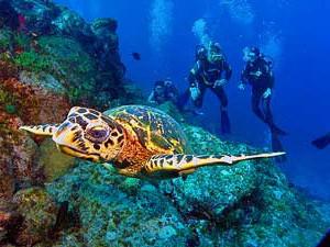 reizen brazilie fernando duiken