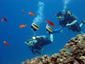brazilie fernando duiken
