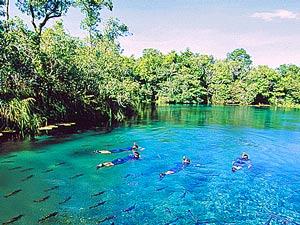 brazilie reizen pantanal bonito rivier
