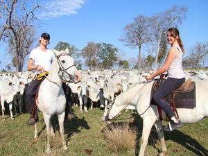 brazilie pantanal paard