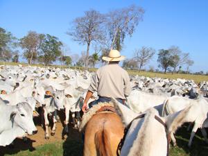 Brazilie vakantie kudde en paarden