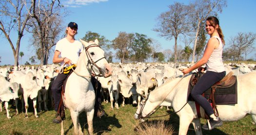 Reis Brazilië: Pantanal