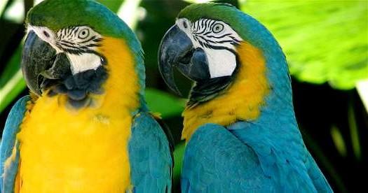 Brazilië rondreizen - Ara's