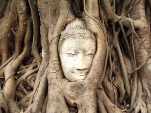 Buddhakopf im Baum in Ayutthaya