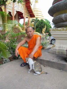 chiang-mai-moench-mit-katze