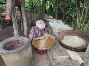 chiang-mai-trekking-einheimische-reislesen