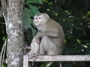 Mit dem Zug durch Thailand-Tierbeobachtungen