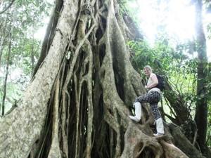 khao-yai-nationalpark-verwurzelter-baum