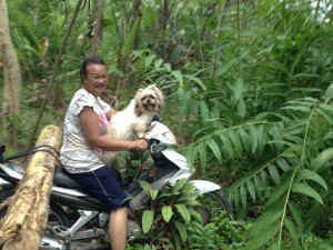 koh-chang-roller-transport