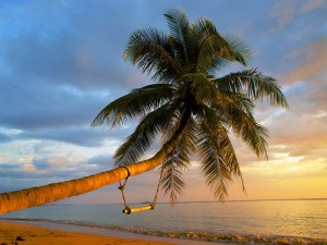 palme-strand-meer-schaukel