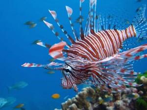 Bunter Fisch im Riff vor Koh Mak