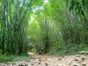 thailand-norden-trekking-bambuswald