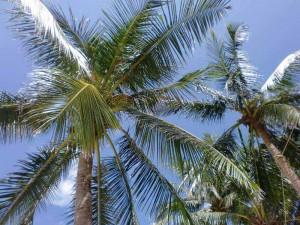 thailand-palmen-suedosten