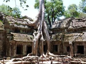 siem-reap-angkor-wat-wurzeln-tempel