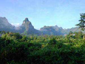 Blick von Ihrer Lodge in den dichten Dschungel