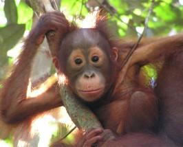 Entdecken Sie die faszinierende Tierwelt Malaysias