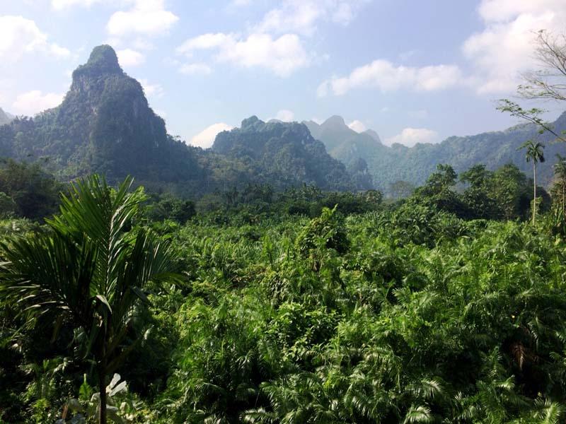Dichten Dschungel auf Ihrer Thailand Rundreise erleben