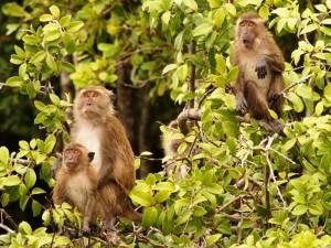 Abschied vom Khao Sok Nationalpark und seinen Bewohnern