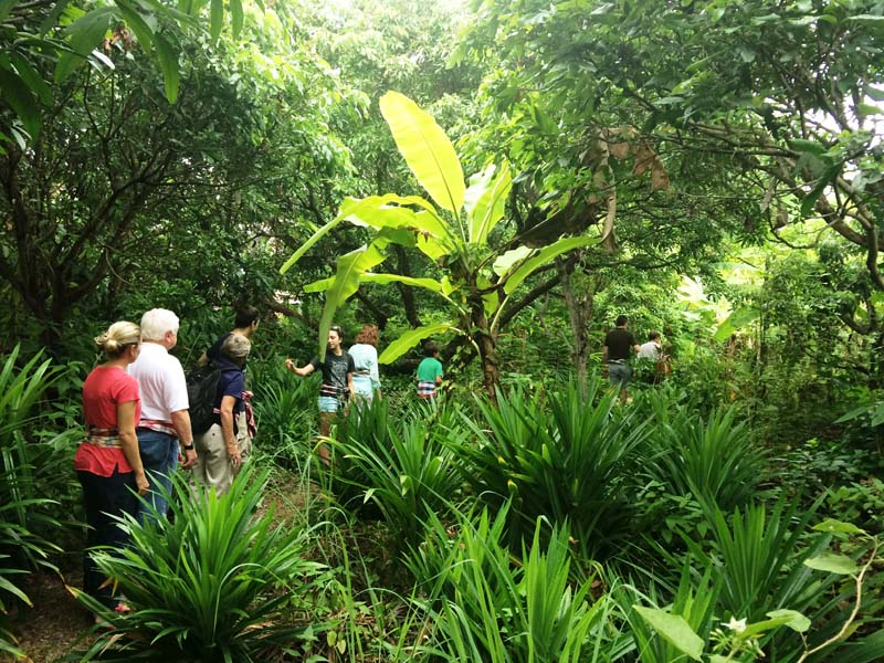 Farbenfrohe Pflanzenwelt in Thailand