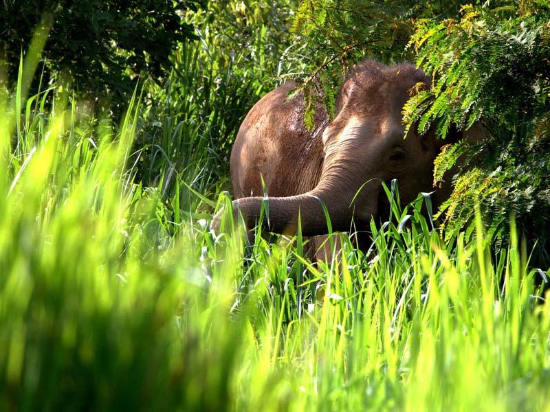 Elefantensichtung im Nationalpark