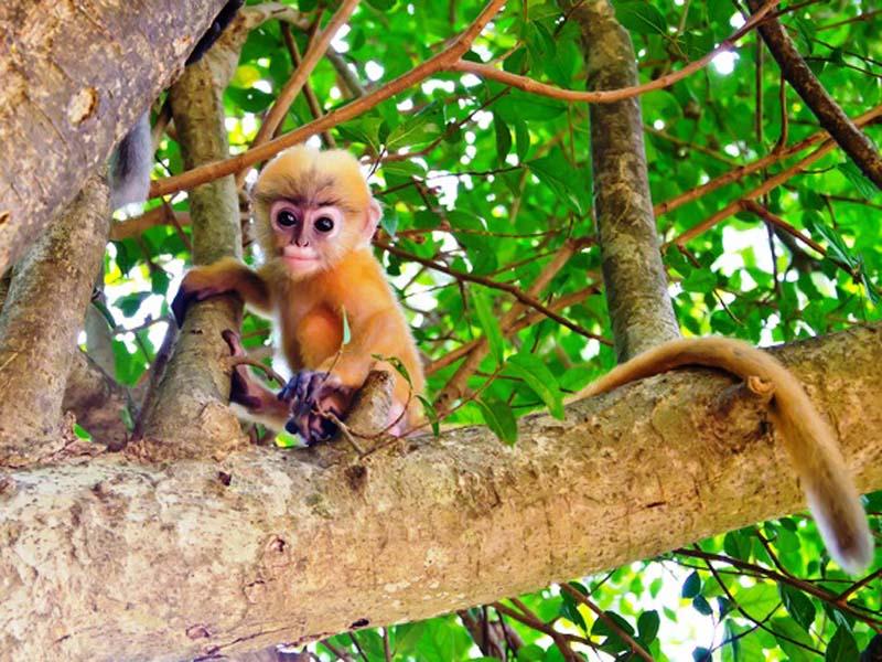Ein Affenbaby im Baum
