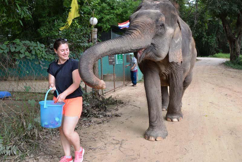 Elefantenfütterung in der WFFT