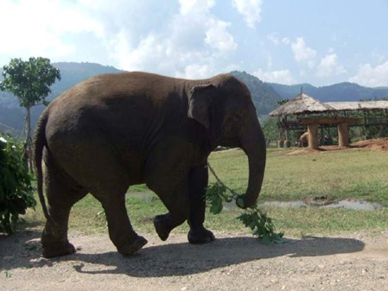 Unterwegs im Elephant Nature Park