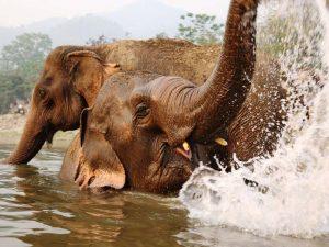 Ein erfrischendes Bad im Fluss für Elefanten
