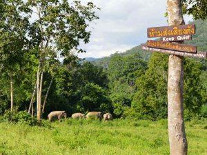 Eine Elefantenherde im Kui Buri Nationalpark
