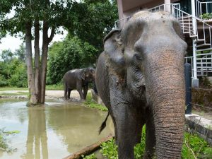 Von Bangkok nach Koh Phangan-Wildlife Friends Foundation Thailand