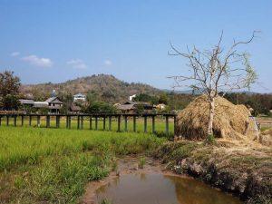 Reisfelder im Isaan