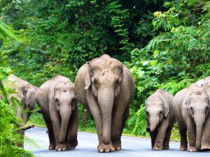 Elefanten im Khao Yai Nationalpark