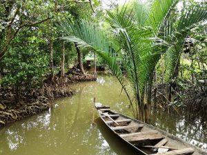 Fahren Sie mit dem Boot durch Mangroven in der Region Trat