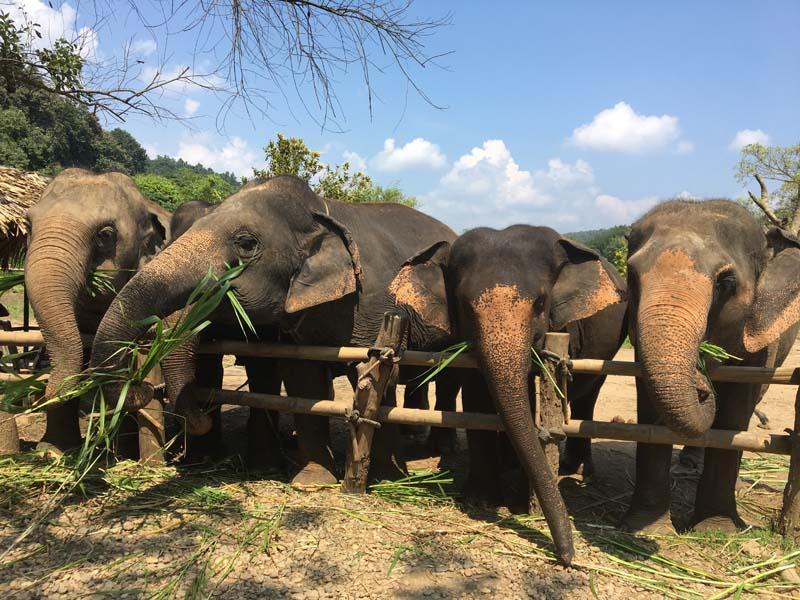 Die Elefanten können sich im Schutzzentrum frei bewegen