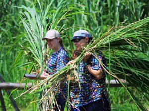 Freiwilligenarbeit im Elephant Valley in Thailand