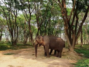 Elefant im Elephant Valley