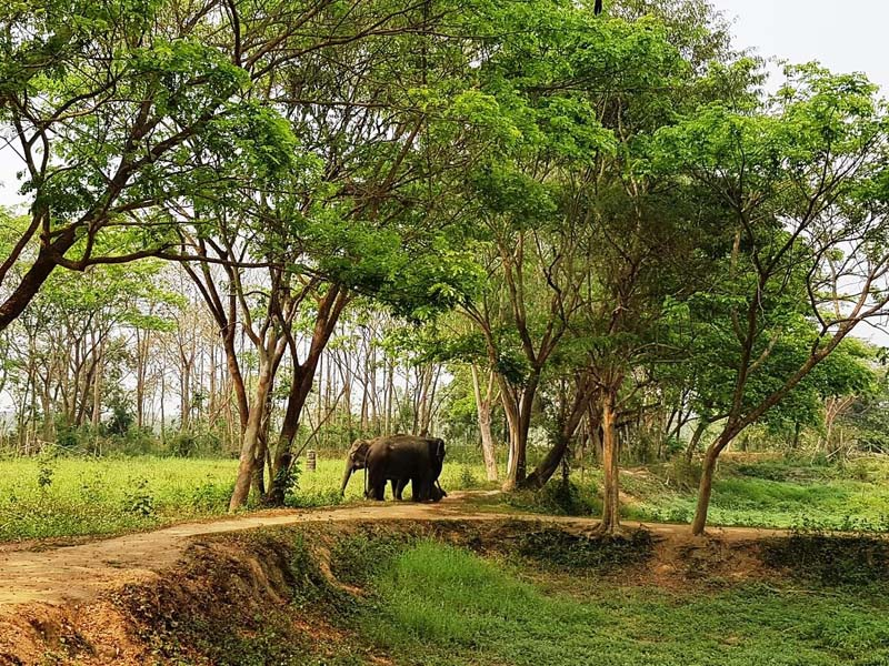 Elefanten in Thailand im Elephant Valley beobachten