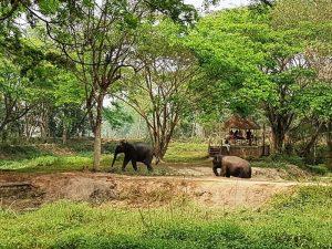 Elefanten in Thailand in ihrem natürlichen Lebensraum