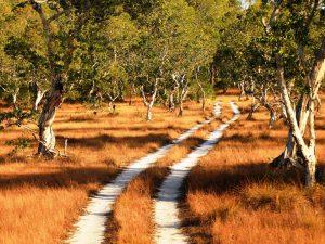 Savannenlandschaft auf Koh Phra Thong