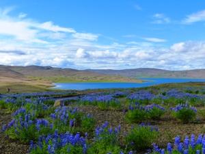 Erleben Sie die Einsamkeit im Landmannalaugar Nationalpark