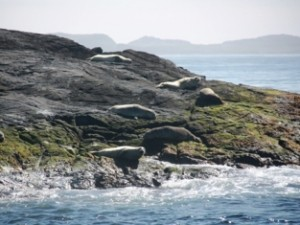 Seehunde und Papageientaucher beobachten