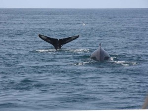 Husavik Whale Watching Tour
