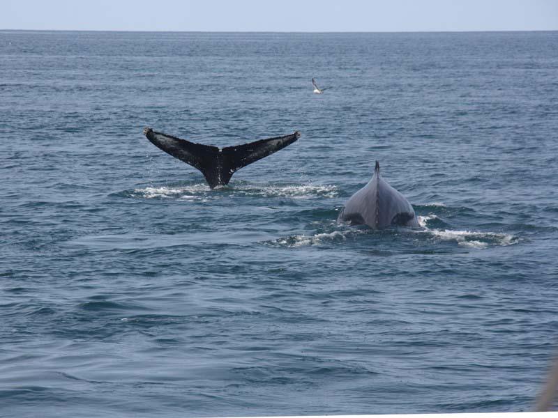 Wale in Island