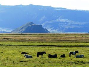 Aktivurlaub Island Island-Islandpferde-Berglandschaft