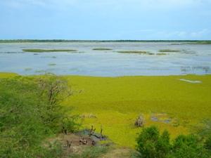 Ufer und grünes Wasser vor Fluss