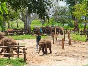 Kleine Elefanten im Elephant Transit Home