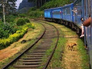 Mit dem Zug durch das Hochland Sri Lankas